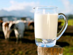 pastörize süt