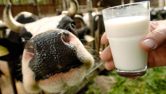 çiğ süt fiyatları